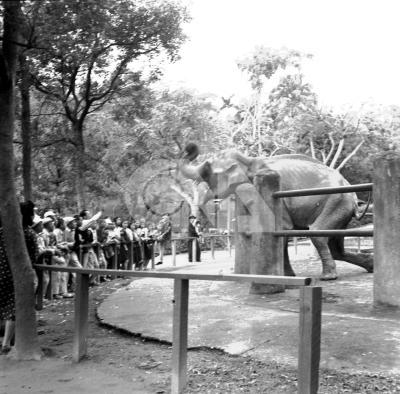 圖為民國37年的圓山動物園。(中央社檔案照片)