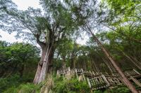 馬告生態園區推生態遊 體驗大自然魅力