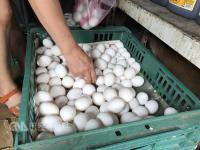 戴奥辛蛋出包 研判饲料添加物含污染物