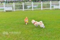 連假帶毛小孩出遊  台北市景點看這裡