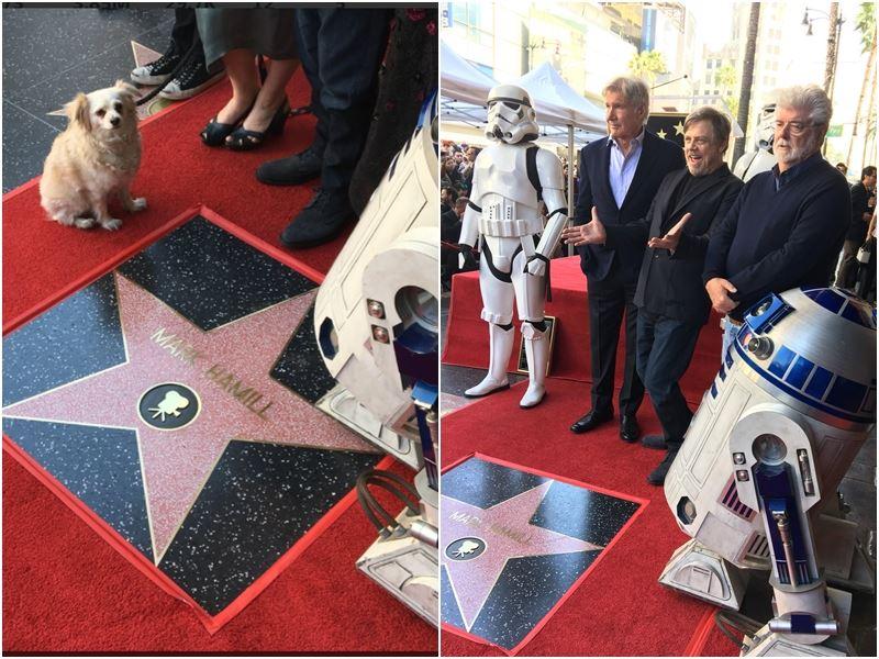 飾演電影「星際大戰」路克天行者一角的馬克漢米爾(右2),名留好萊塢星光大道獲得專屬星星,同戲影星哈里遜福特(右3)與導演喬治盧卡斯(右一)齊聚祝賀。(圖取自星際大戰推特twitter.com/starwars)