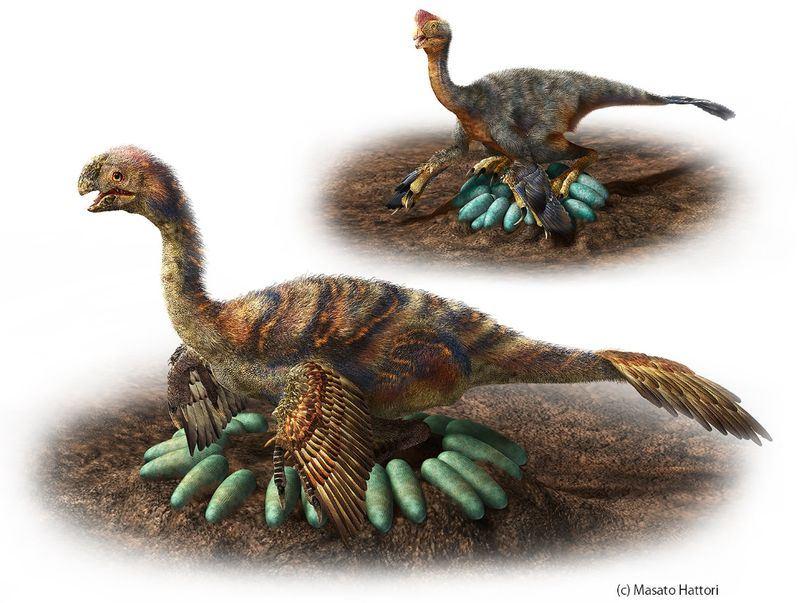 日本研究發現,有些巨型恐龍不但會築巢,還會像鳥類一樣精心呵護未孵化的後代,有學者猜測恐龍會「坐在蛋巢中央的空隙」孵蛋,以免把蛋壓碎。(圖取自名古屋大學博物館推特twitter.com/nagoyau_museum)