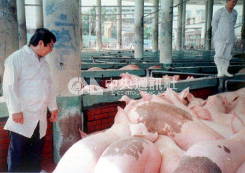 民國86年台灣毛豬爆發口蹄疫疫情,交易崩盤,價格頓時腰斬,外銷中斷。圖為86年獸醫嚴格檢查防範感染口蹄疫的毛豬上市。(中央社檔案照片)