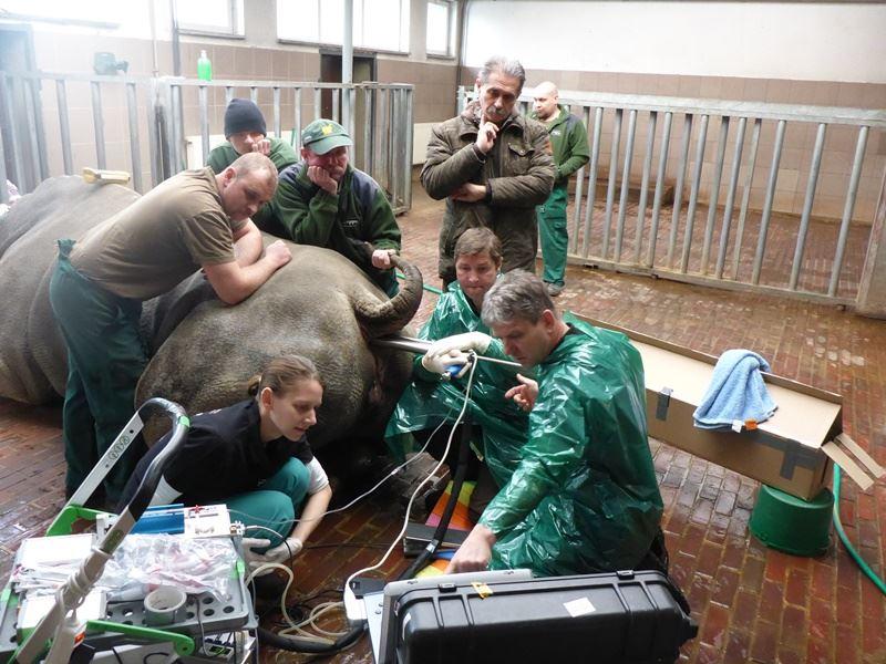 科學家培養出嵌入北非白犀牛DNA的胚胎,盼能讓這種白犀牛亞種躲過絕種命運。(圖取自柏林萊布尼茲動物與野生動物研究所網頁www.izw-berlin.de)