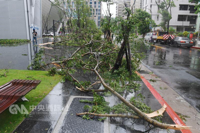 颱風瑪莉亞暴風圈11日凌晨快閃掃過北台灣,中央災害應變中心表示,統計災情顯示全台共有8人受傷,均為輕傷且集中台北市。圖為路樹遭陣風吹倒。中央社記者施宗暉攝107年7月11日