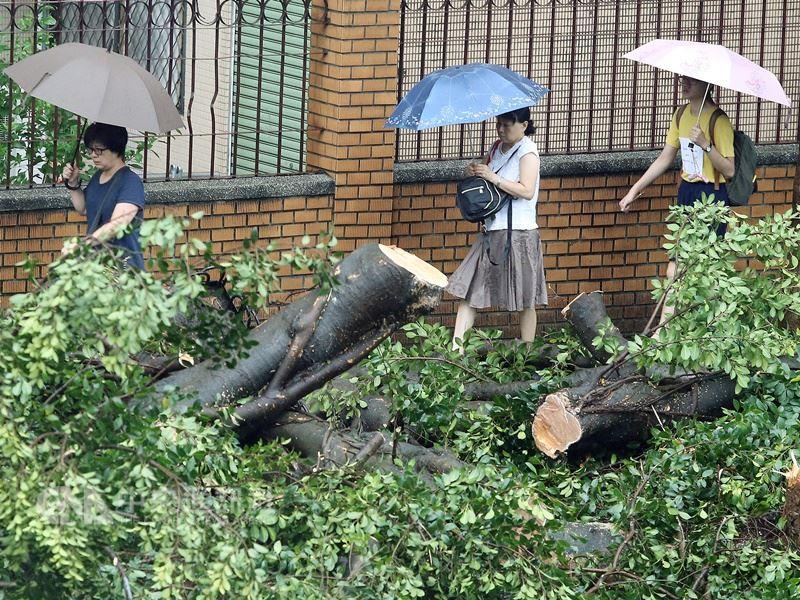 颱風瑪莉亞快閃過境,台北市與基隆市11日正常上班上課。經過一夜風雨,台北市人行道上有路樹倒塌。中央社記者郭日曉攝107年7月11日