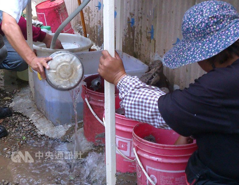 白線斑蚊和埃及斑蚊卵在乾燥3到6個月都還有孵化能力,大雨後應把握時間清理積水容器。(中央社檔案照片)