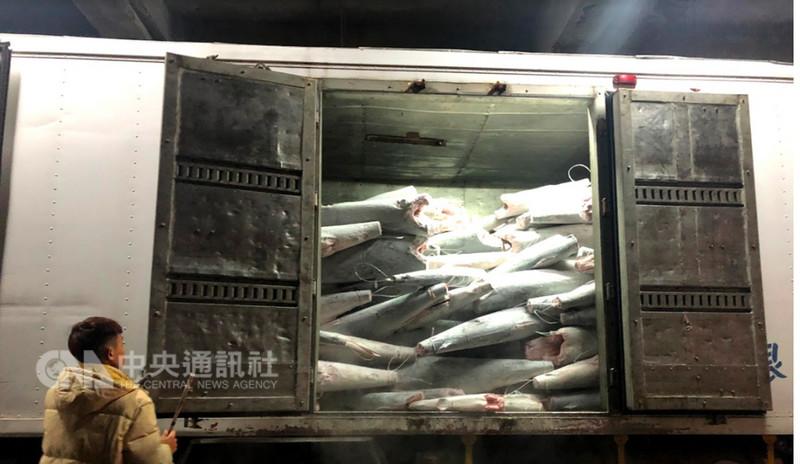 農委會漁業署13日在高雄小港漁港針對太平洋小釣船「金昌6號」進行全程卸魚檢查,查獲逾30噸俗稱黑鯊的禁捕鯊種「平滑白眼鮫」,已將漁獲物全數扣留封存。(漁業署提供)中央社記者楊淑閔傳真 107年9月13日
